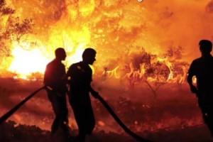 Orman Yangınları Belgeselleşti